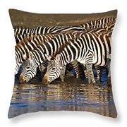Herd Of Zebras Drinking Water Throw Pillow