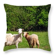 Here Is Looking At Ewe Throw Pillow