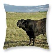 Hereford Bull Throw Pillow
