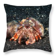 Hermit Crab With Anemone Throw Pillow