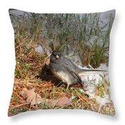 Dark-eyed Junco Throw Pillow