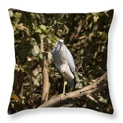 Heron At Katherine Gorge Throw Pillow