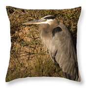 Heron Basking In The Morning Sun Throw Pillow