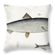 Herring Throw Pillow by Andreas Ludwig Kruger