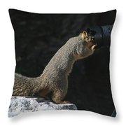 Hey Anybody Home? Throw Pillow