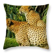 Hey Bro - Do You See What I See? Throw Pillow