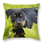 Hey Here I Am Throw Pillow by Heiko Koehrer-Wagner