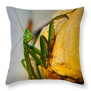 Hey What's Up Throw Pillow