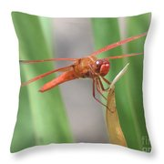 Hi Dragon Fly Throw Pillow