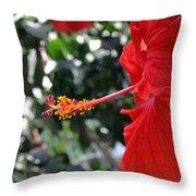 Hibiscus 2685 Throw Pillow