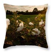 Hibiscus At Sunrise  Throw Pillow