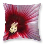 Hibiscus-callaway Gardens Throw Pillow