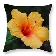 Hibiscus Flower In Puerto Rico Throw Pillow
