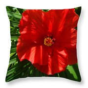 Hibiscus Good Morning Throw Pillow