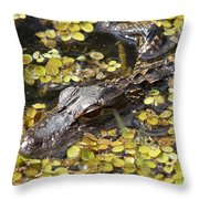 Hiding Alligator Throw Pillow