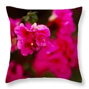 Hiding In Pink Throw Pillow