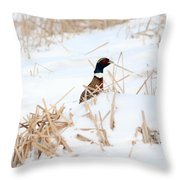 Hiding Rooster Throw Pillow