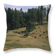 High Angle View Of Bisons Grazing Throw Pillow