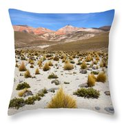 High In The Chilean Altiplano Throw Pillow