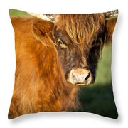 Highland Cow Throw Pillow