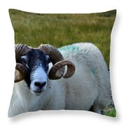Highland Sheep Throw Pillow