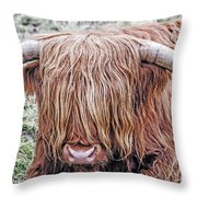 Highlands Coo Throw Pillow