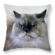 Himalayan Persian Cat Throw Pillow