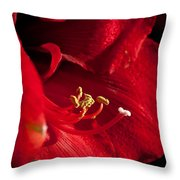 Hippeastrum Throw Pillow