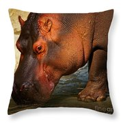 Hippo On The Waterfront Throw Pillow