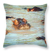 Hippopotamus Group In River. Serengeti. Tanzania Throw Pillow