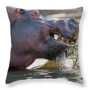 Hippopotamus  Throw Pillow