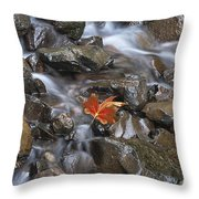Hitching A Ride IIi Throw Pillow