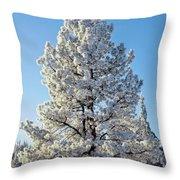 Hoar Frost Ponderos Pine Tree, Sundance Throw Pillow