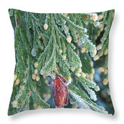 Hoarfrost On Pine Bough Yosemite National Park Throw Pillow