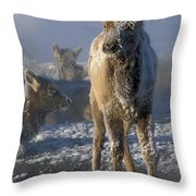 Hoarfrosted Elk Calf Throw Pillow