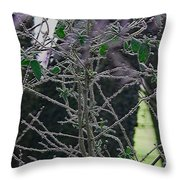 Hoars Frost-featured In Nature Photography Group Throw Pillow