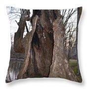 Hollow Tree At Mather Mill Throw Pillow