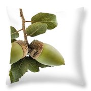 Holm Oak Branch With Acorns Throw Pillow