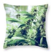 Home Grown Cannabis Plants. Throw Pillow