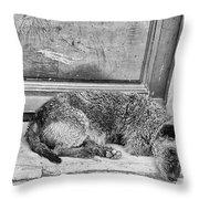 Homeless Dog Throw Pillow