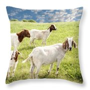 Homeward Bound Throw Pillow by Amy Tyler