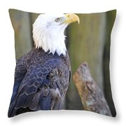 Homosassa Springs Bald Eagle Throw Pillow