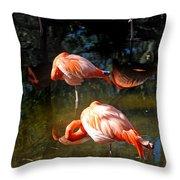 Homosassa Springs Flamingos 5 Throw Pillow