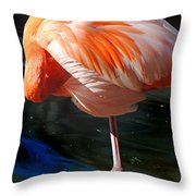 Homosassa Springs Flamingos 7 Throw Pillow