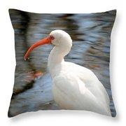 Homosassa Springs Ibis 1 Throw Pillow