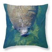 Homosassa Springs Manatee 4 Throw Pillow