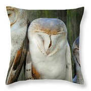 Homosassa Springs Snowy Owls 1 Throw Pillow