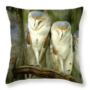 Homosassa Springs Snowy Owls 2 Throw Pillow