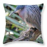 Homosassa Springs Waterfowl 10 Throw Pillow