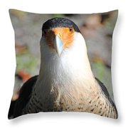 Homosassa Springs Waterfowl 21 Throw Pillow